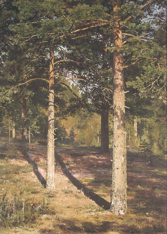 Картина «Сосны, освещенные солнцем», художник: Иван Иванович Шишкин